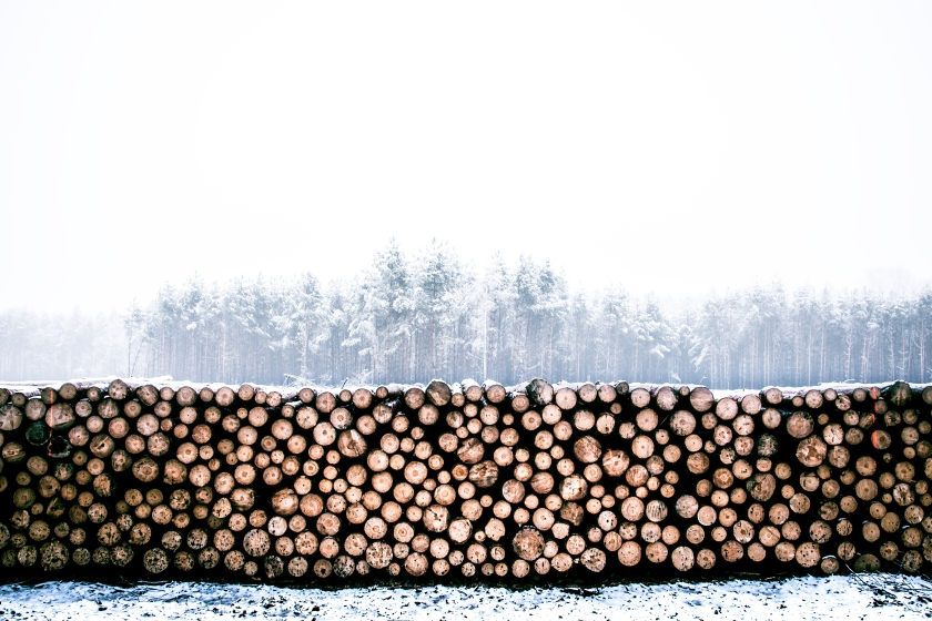 timber in winter